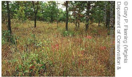 piedmont habitat