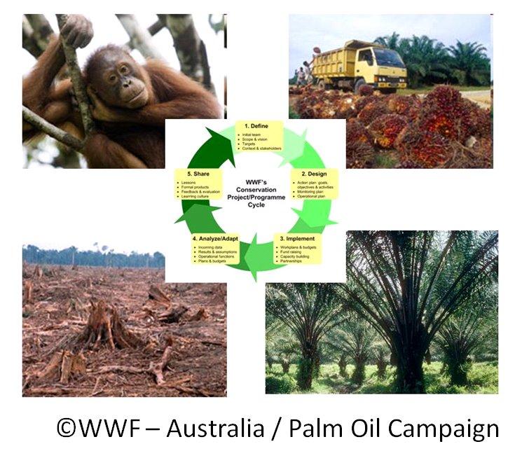 Case Study Snackbrands Australia: CCNet Case Study: WWF-Australia Palm Oil Campaign