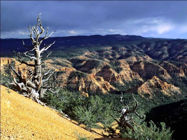 Landscape Conservation Forecasting: Report to the Powell Ranger ...